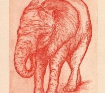 elefant-rot-r0000ff-27x40cm