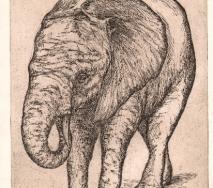 elefant-schwarz-r0000-25x35cm