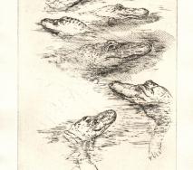 krokodile-schwarz-r0000ff-26x40cm