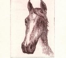 pferdekopf-braun-r0000ff-20x27cm