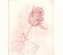 rose-rot-r0000ff-26x40cm