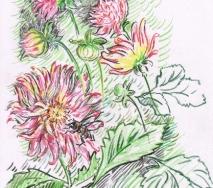 biene-auf-chrysantheme-b0808ff-30x40cm