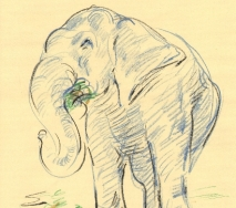 elefant-b1306ffs-30x40cm