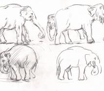 elefantenstudie-b0711ff-40x30cm