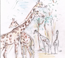 giraffen-b0309ffs-30x40cm
