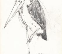 professorenvogel-b8602ff-30x40cm