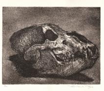 schaedel-schwarz-zoologisches-museum-r0000me-52x40cm
