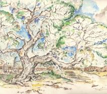 mallorca-olivenbaum-i-001_stitch